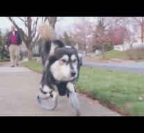 Dog gets 3D-Printed Prosthetics