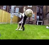 Dog Fetch Fails